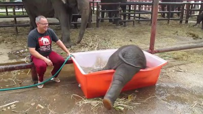Купание слонёнка