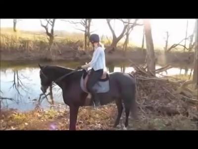 Лошадь впервые увидела реку