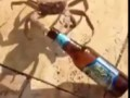 Alcoholic Crab Snags A Man's Beer