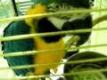 Попугай Ара в зоомагазине Динозаврик
