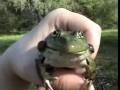 Разговорчивая лягушка | Crazy frog