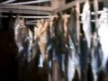 Результат рыбалки на Десне