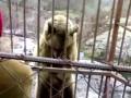 Медведь стесняется