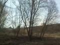 Паровой поезд в Истре