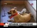 В китайском заповеднике собака усыновила тигрят