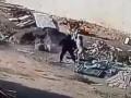 Собака спасает человека от большой собаки (Dog saves man from big dog attack)