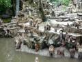 Обед у обезьян в зоопарке