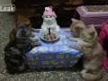 Кошкин день рождения