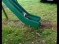 Коты против качели