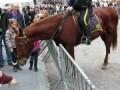 Собака знакомится с лошадкой