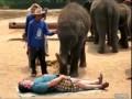 Слон - массажист