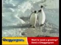 Пингвин получил подзатыльник