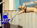 TreT - собака-паркурист из Украины в Москве