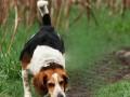 собака-и-лиса