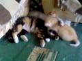 две мамы у котёнка