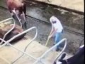 How Now, Brown Farmer? Cow Projectile Poops on Farmer as He Cleans Out Shed in Iowa