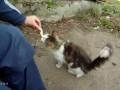 Голодный котик