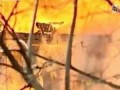 Бе-200 тушит дом | Russian plane BE200 sprays fire