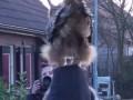 Сова приземляется на голову