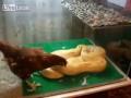 Покорми змейку