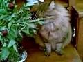 Кот ест пионы