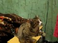 погладь кота1