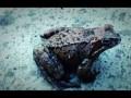 Хаски и лягушка