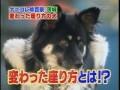 Собака на заборе
