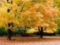 autumn00010