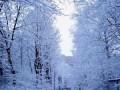 Зима, зима....