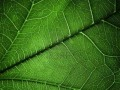12774192-plant-texture-background-for-different-uses