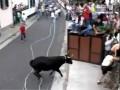 Забег с быками