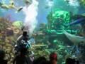 Океанариум Нептун СПб кормление акул