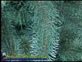 Искусственная хвоя, новогодние ёлки оптом, Украина. Бизнес Житомира (11)