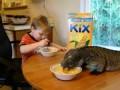 Завтрак с игуаной .