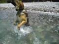 Собака - закамняминыряка
