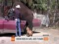 Бизон - лучший друг человека