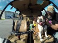 Bentley the Bulldog's Helicopter Adventure | Shot in 4k