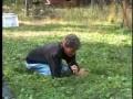 Задержание растительницы конопли