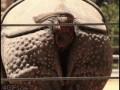 носорог срет
