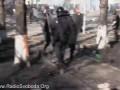 Мітингувальники вибили внутрішні війська з Шовковичної