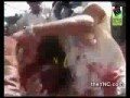 пленого  Муамар Каддафи таскают за волосы