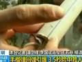 Бросок гранаты по-китайски