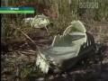 Нападение бродячих собак в Крыму