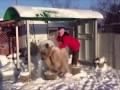 Как правильно купать медведя