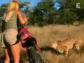 Как вести себя с гепардами