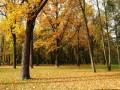 autumn00030