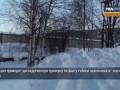 В Архангельске занялись отловом бездомных собак