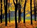 sunny_autumn00040