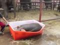 Слоненок получает удовольствие от ванны